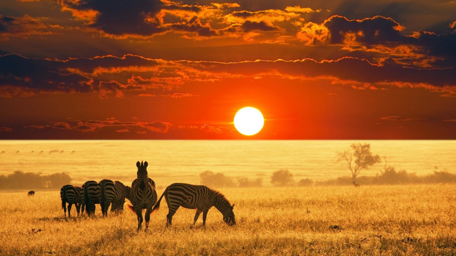 afrikanskoe-safari-idealnyy-otpusk-1
